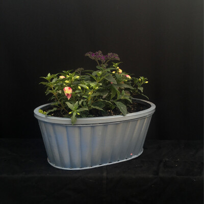 Blue Fuschia Planter - Shade