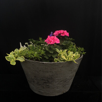 Large Round Grey Planter - Million Bell And Geranium Mix