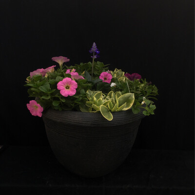 Black Pot With Pink Petunia Mix