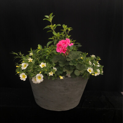 Larger Round Grey Planter - Million Bell & Geranium Mix