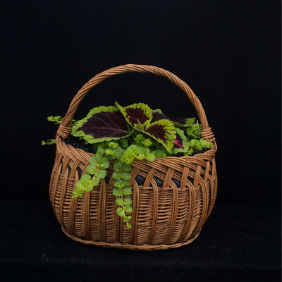 Shade Basket With Coleus - Shade