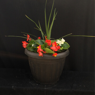 Small Mixed Begonia Planter - Shade