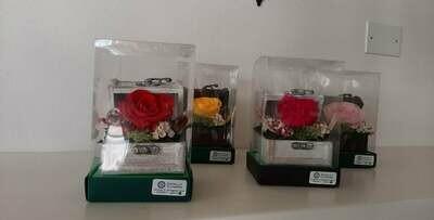 Rose stabilizzate con scrigno
