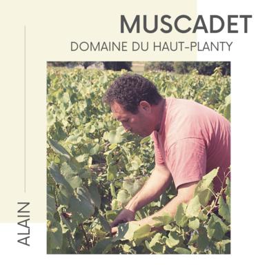 Loire - Muscadet