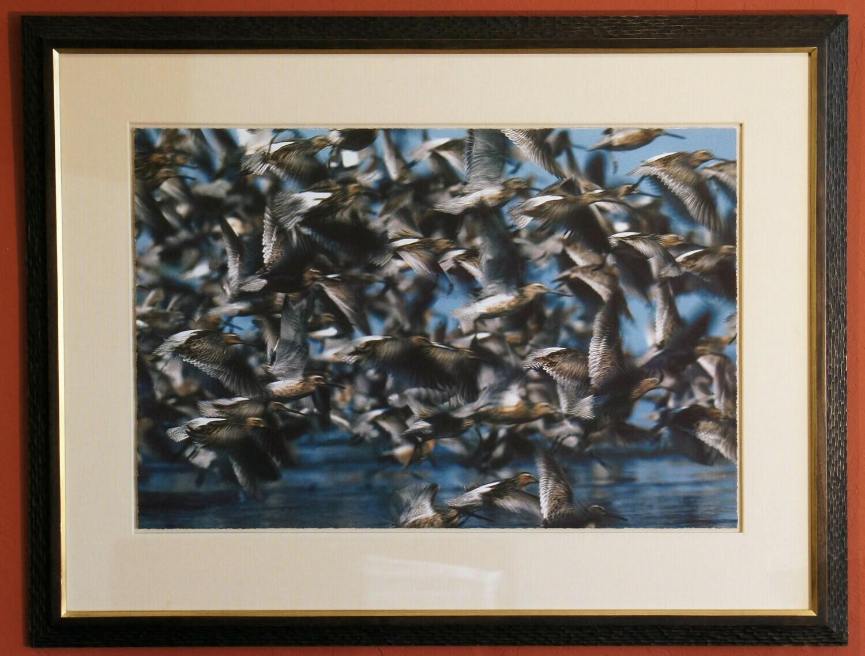 Audubon Society Photo