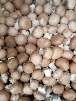Champignons - les 500 gr. Cliquez pour voir idée recette