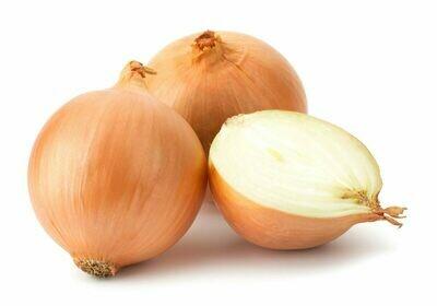Oignon - orgeval . 500 grammes. (Gros)