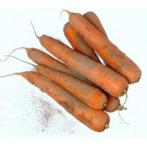 Carotte. Direct producteur.  500 grammes environ 3 à 4 carottes