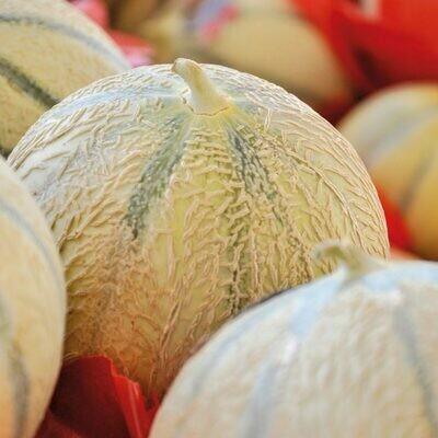 Melon charentais. Maroc. 2 pièces