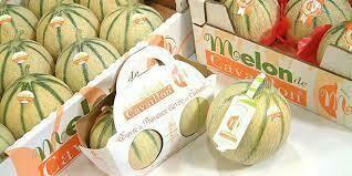 Melon de Cavaillon. 1 pièce. Env 900 grammes à 1 kilo