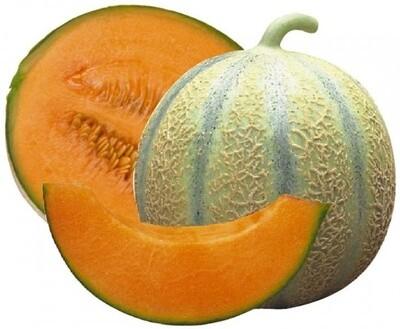 Melon de cavaillon. Plein champ 1 PIÈCE
