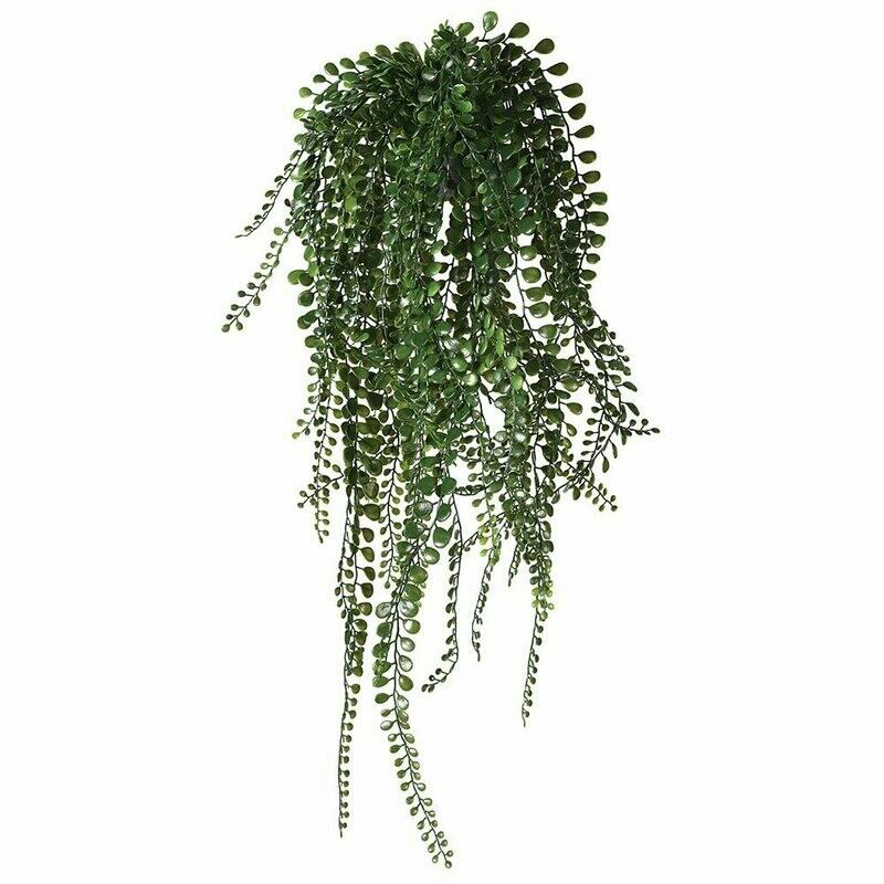 Pea Leaf Hanging Plant