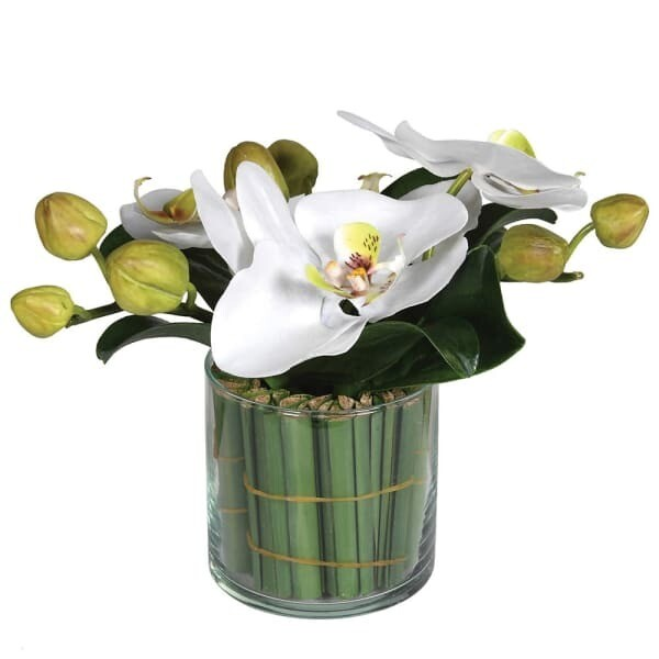 Small Orchid in Glass with Greenery