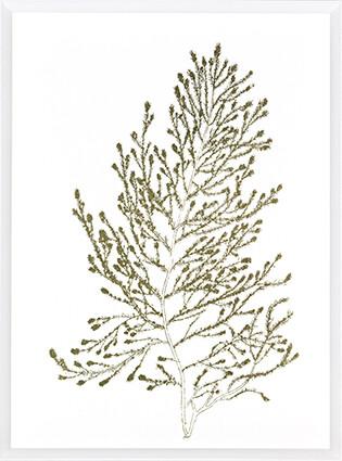 Gold Foil Algae IV Print