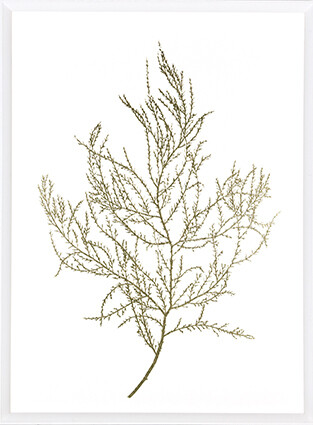 Gold Foil Algae III Print