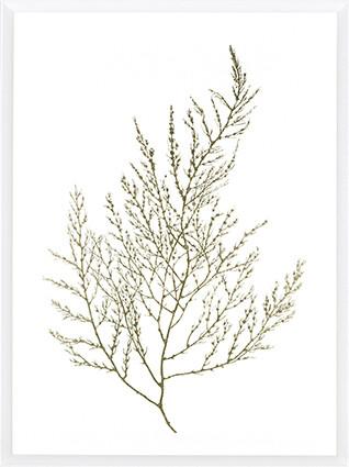 Gold Foil Algae II Print
