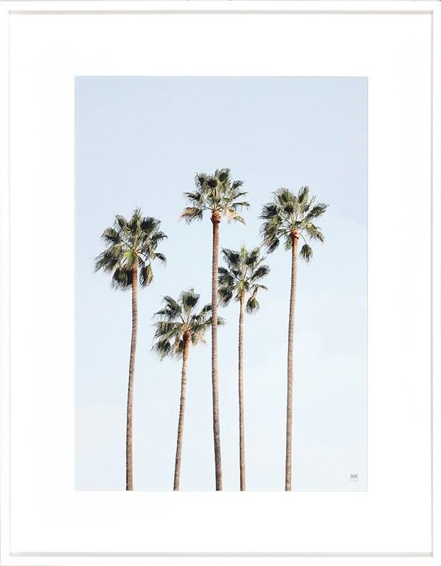 Regal Palm Trees