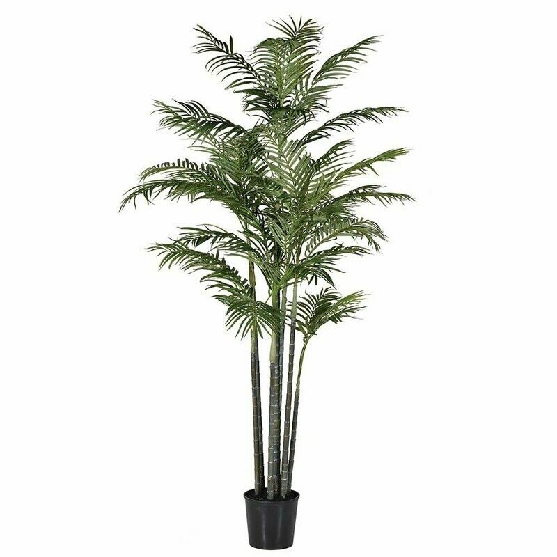 Green Bamboo Palm Tree