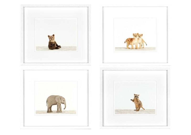 Animal Prints I