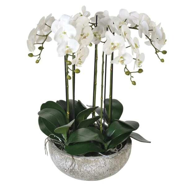 White Orchid Phalaenopsis Plants in Stone-look Bowl
