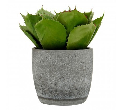 Fiori Large Succulent in Cement Pot