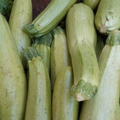 Zucchine bianche di trieste (1 kg)