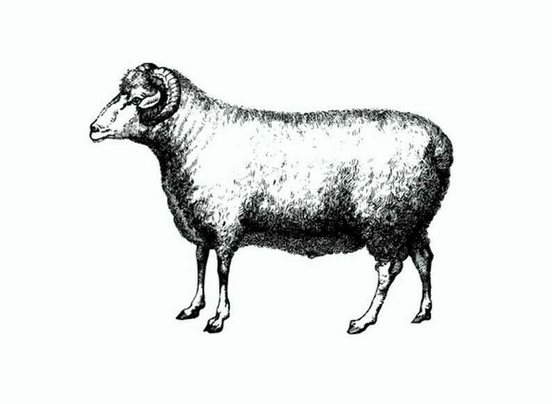 1/2 Leg of Lamb