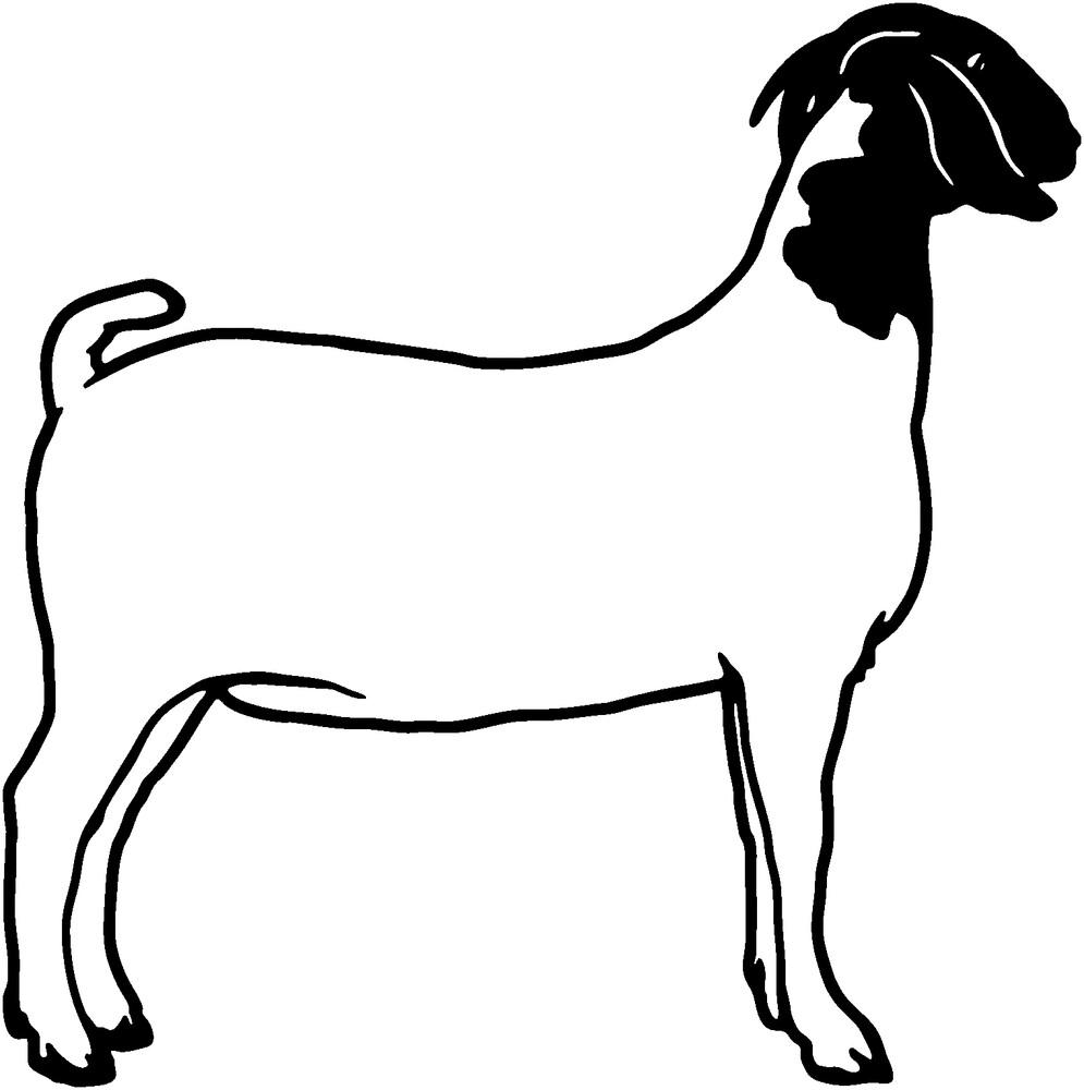 Goat Shanks