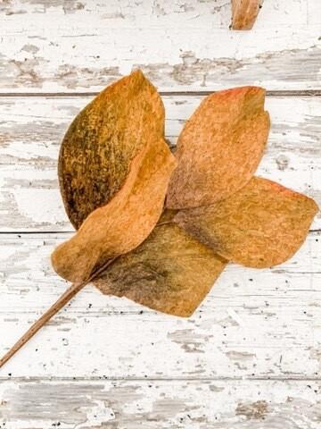 Fall Magnolia Pick
