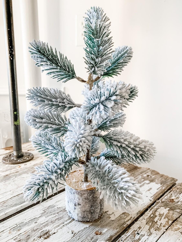 Snowden Pine Tree
