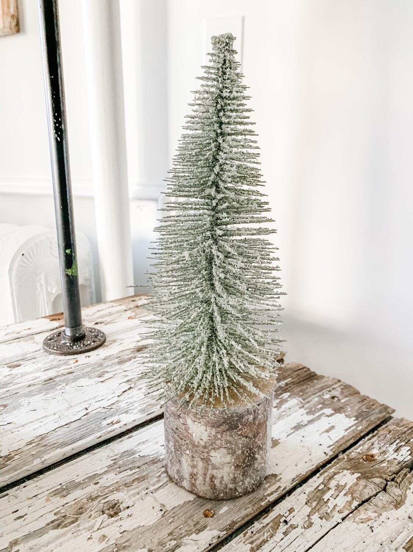 White Foxtail Pine