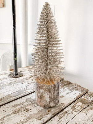 Silver Foxtail Pine M