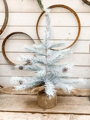 Silver Crest Pine Tree