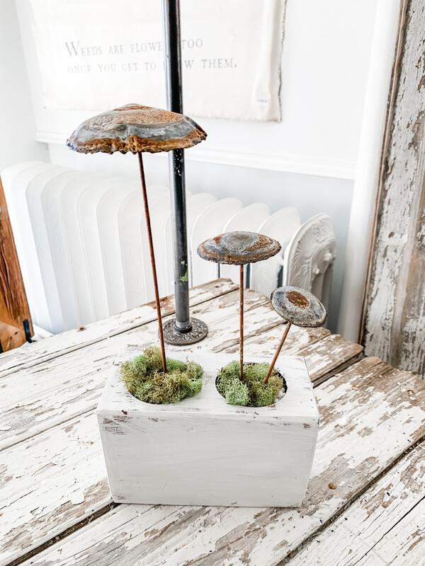 Zinc Mushrooms
