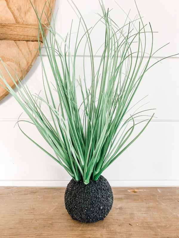 Onion Grass Bulb