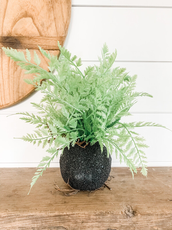 Fern With Root Ball