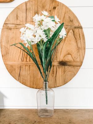 Narcissus Bush