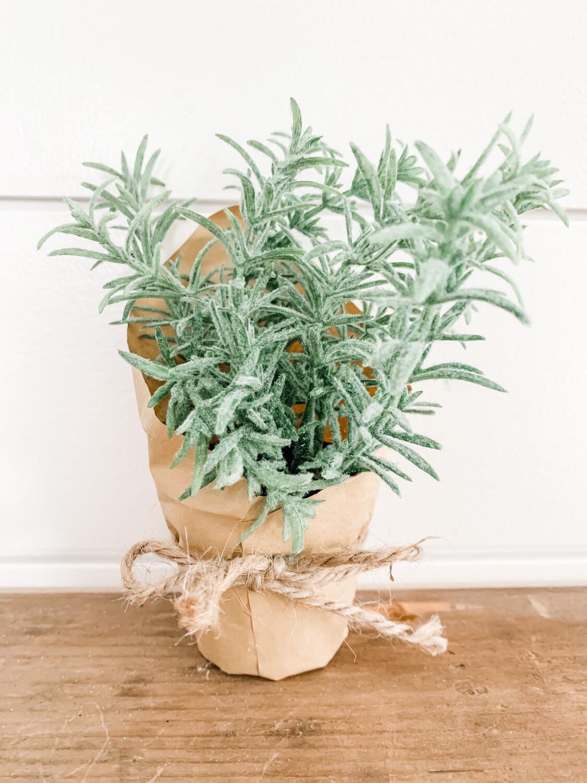 Paper Pot Rosemary