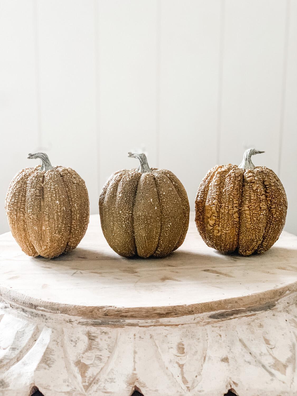 Furrowed Field Pumpkin