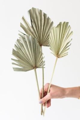 Palmspeer natur