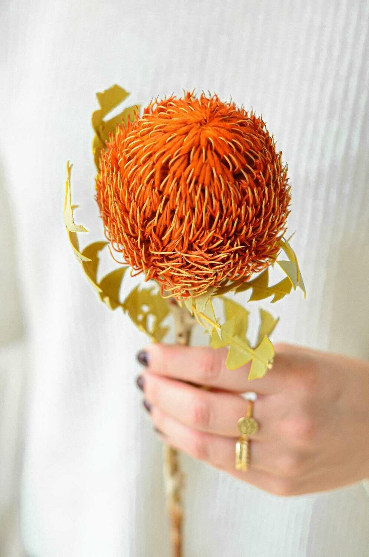 Banksia
