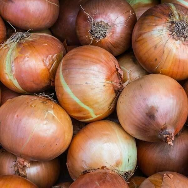 CIPOLLA DORATA - Allium Cepa - conf. ORTO 12pz