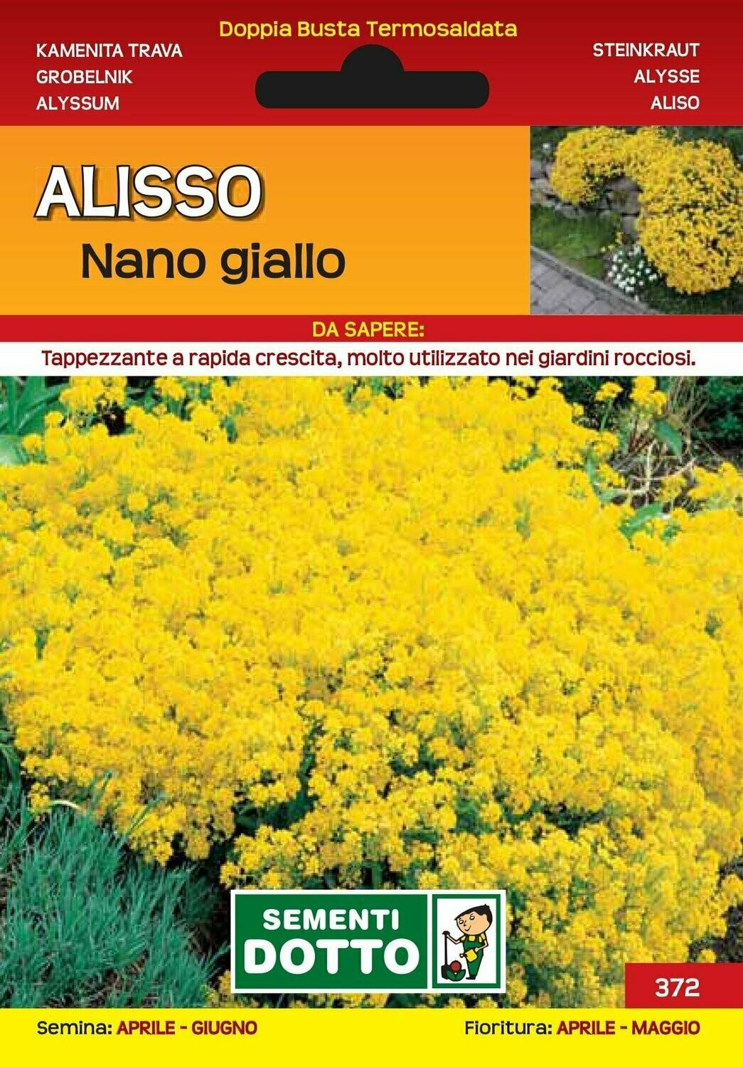 ALISSO NANO GIALLO - Alyssum - busta semi