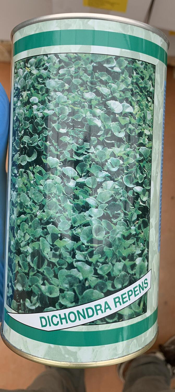 Seme Dicondra Repens 0,5 kg SEMENTI SEMENZA