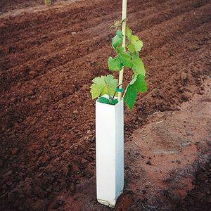 Shelter Protezione giovani piante
