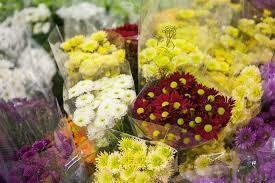 Crisantemini/Sancarlini, fiori recisi sfusi (NO MAZZO)/OGNISSANTI