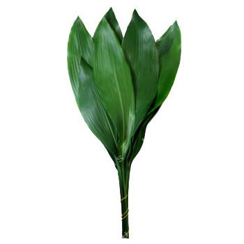 ASPIDIDSTRIA, fiori recisi sfusi (NO MAZZO)/OGNISSANTI