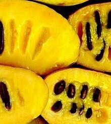 BANANO DEL NORD / ASIMINA TRILOBA / PAW PAW/ Banana