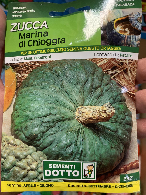 Zucca Marina di Chioggia BUSTA SEMI
