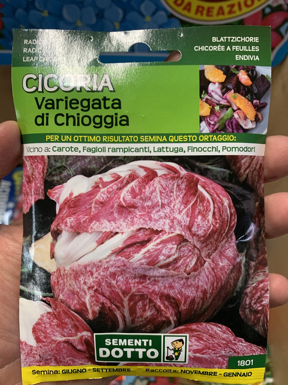 Cicoria variegata Chioggia BUSTA SEMI